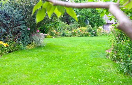 Beautiful backyard garden landscape. Green lawn background in the centre. Branch with a green leaves in front. Standard-Bild
