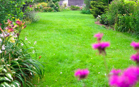 Beautiful, green backyard lawn for background. Flowers in front of the fresh, green lawn.
