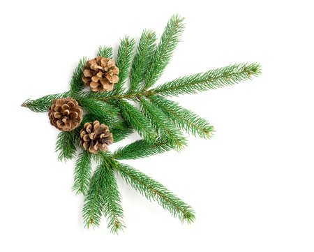 Spruce tree branch and cones isolated on white background. High angle view.