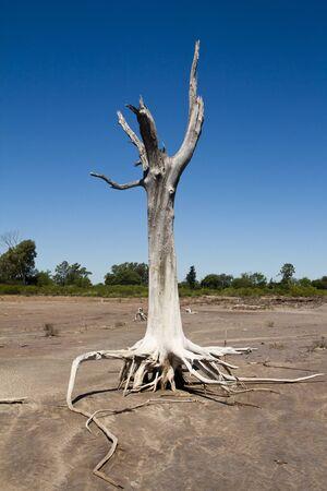 salinity: roots