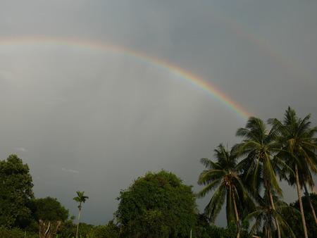 Rainbow tree coconut
