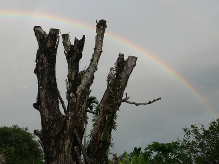 Rainbow with wood Stok Fotoğraf