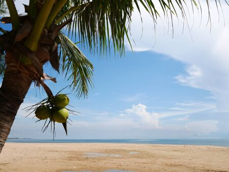 Beach coconut sew view with blue sky Stock Photo