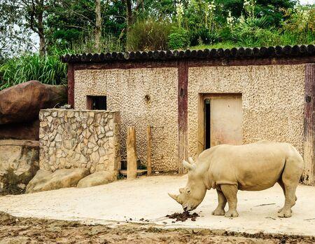land mammal: Close up of rhinoceros