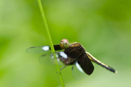 dragonfly in green nature photo