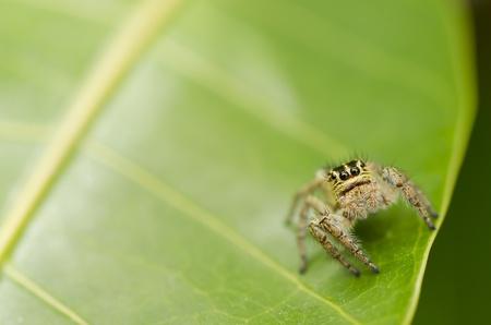 spider on green leaf photo
