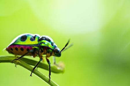 colorful beetle green nature Stock Photo