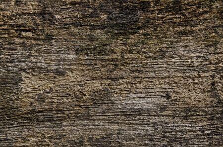 grunge wood wall photo