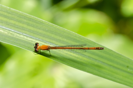 little dragonfly in green nature Stock Photo