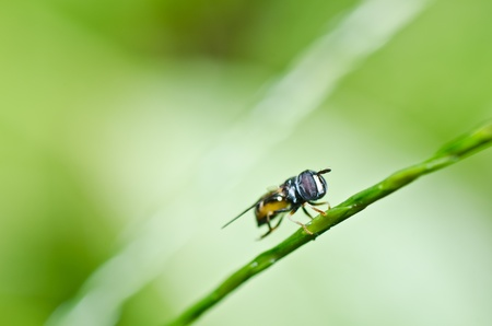 hover: Flower files or Fruit files or Hover files in garden or in green nature Stock Photo