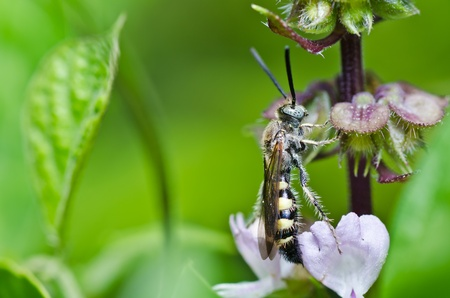 mammoth wasp in green nature or in the garden Stock Photo - 10351572