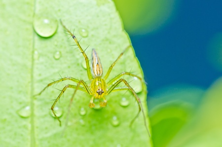 long legs spider in green nature or in forest Stock Photo - 10351444