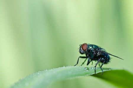 green fly in green nature or in the city