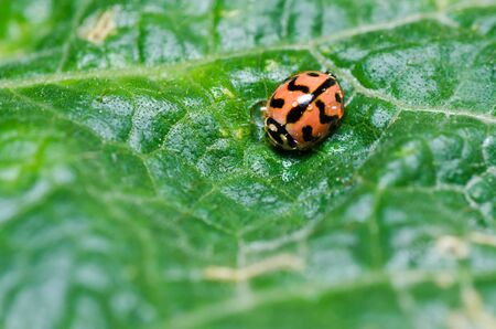 ladybug in green nature or in the garden photo