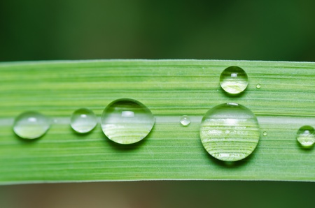 fresh water drops in green nature or in forest photo