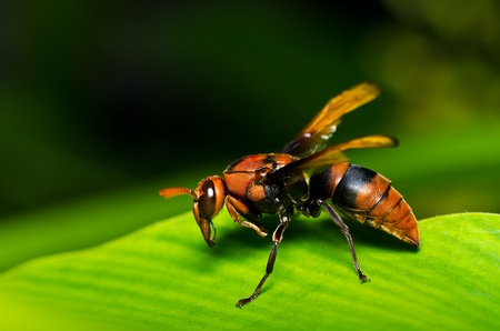wasp in green nature or in garden. Its danger.