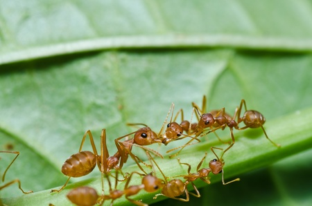 red ants in green nature photo