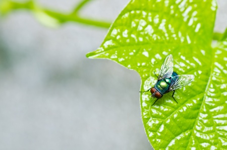 fly in green nature or in the city photo