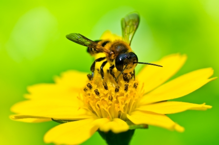 blossom honey: bee in green nature or in the garden Stock Photo