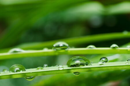 fresh water drops in green nature or in forest Stock Photo