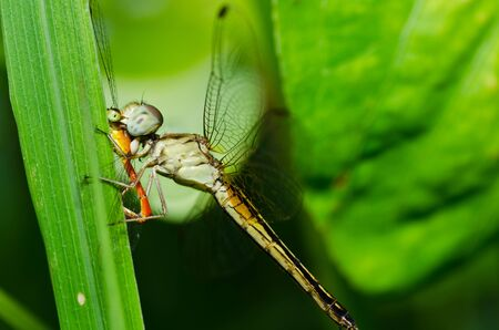 dragonfly in garden or in green nature photo