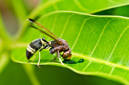 wasp in green nature or in garden. Its danger. photo