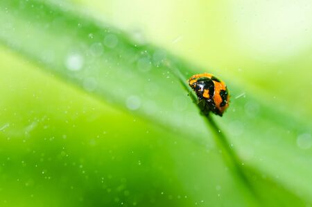 ladybug in the green nature or in the garden photo