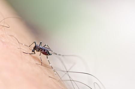 mosquito in nature or in the city