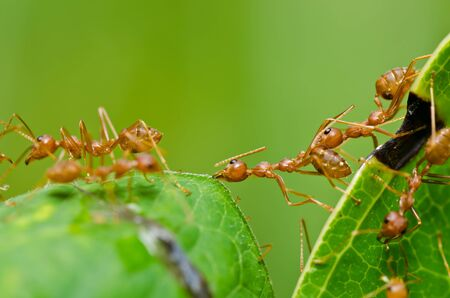 red ant in green nature or in the garden Stock Photo - 11644867