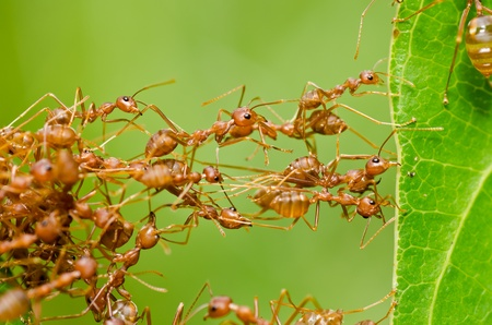 red ant in green nature or in the garden photo