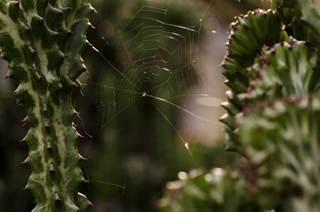 Spider web in green nature or in the forest photo