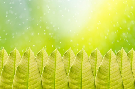 Green leaf and water motion in green nature Stock Photo