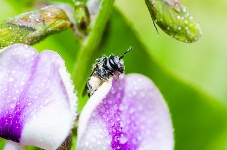 bee macro in green nature or in the garden Stock Photo - 12989142