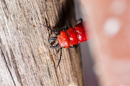 biotope: red bug and wood in the green nature Stock Photo