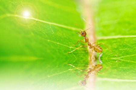 red ant in green nature or in forest Stock Photo - 13561412
