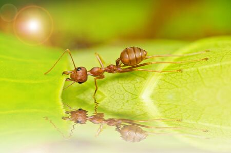 red ant powerful in green nature photo