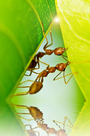 red ants team work in building home photo
