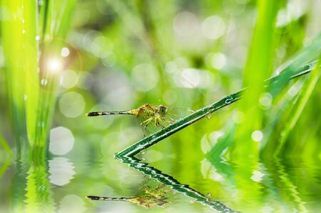 sunligh: dragonfly dragonfly and sunligh in garden or in green nature