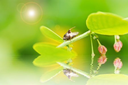 Aphid insect in green nature or in the garden Stock Photo - 13560536