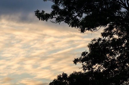 sillouette: sillouette tree and sky in the nature Stock Photo