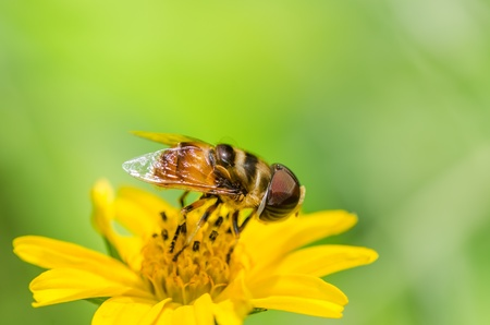 hover: Fruit files or Flower files or hover files macro in green nature or in the garden Stock Photo