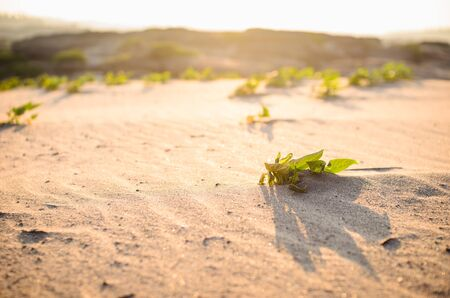 Green plant  on the sand leaves and sun photo