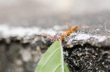 red ant power in the nature photo