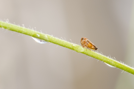 Aphids on the plant in the nature or garden photo