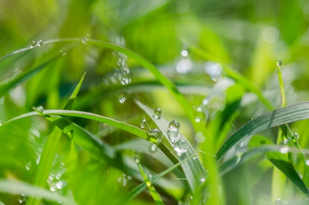 Grass and water drops in the nature concept photo