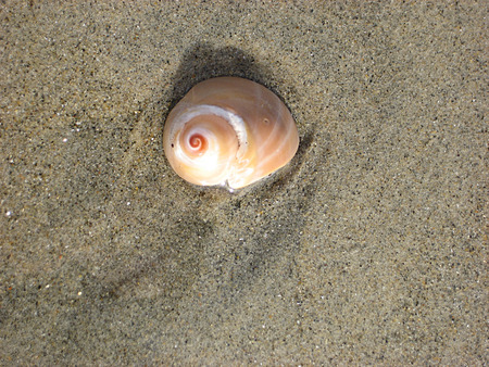 seashell on sandy beach
