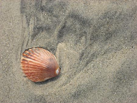 seashell scallop pink Banco de Imagens