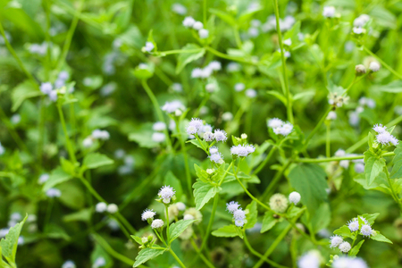 Grass flowers on a garden background. Stock Photo