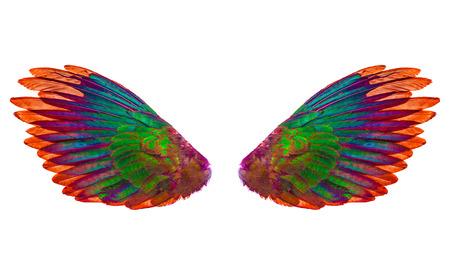 Angel wings isolated on white background 版權商用圖片