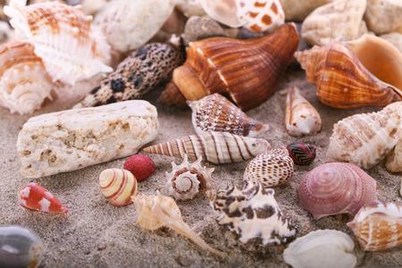 Shells on sandy beach Stock Photo